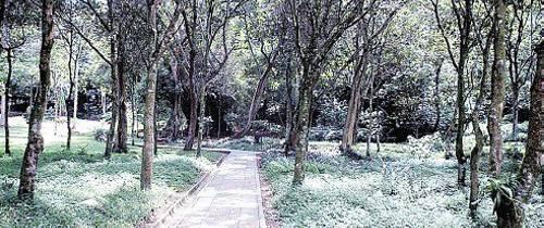Parque La Flora preocupa a sus caminantes