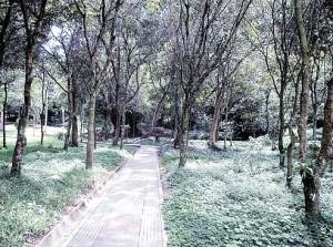 Parque La Flora