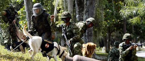 Caninos que salvan vidas