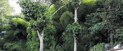 Talan árboles que amenazaban El Jardín
