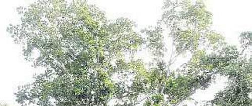 El Jardín necesita poda ante amenaza de árboles