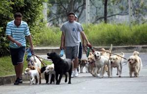 Perros en Cabecera
