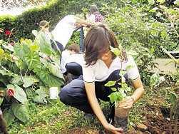 Jóvenes hicieron reforestación