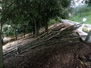 Estos palos de bambú fueron abandonados a mediados de octubre de 2010.