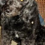 Esta perrita fue encontrada el 1 de enero en la madrugada sobre la carrera 36 con 48.