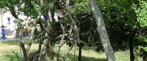 La rama podría caer sobre alguien
