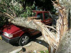 Caída de la rama de un árbol sobre un carro Fiat rojo en la calle 38 # 34-66, del barrio El Prado