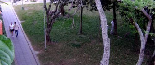 Las ramas se meten a la casa