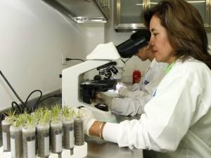 Para conocer más sobre la investigación de Beatriz Guerra y otros estudios de la UDES puede consultar la página: http://biotecnologiaagroambiental.amawebs.com.