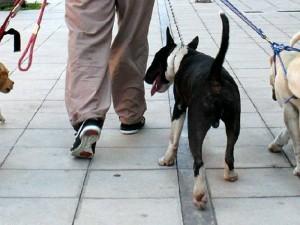 La 'Periodista del Barrio' denunció maltrato a perros por parte de la persona contratada para pasearlos.