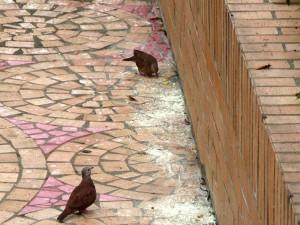 Tenemos un problema en la calle 65 entre carreras 46 y 47 en La Floresta, con unas palomas.