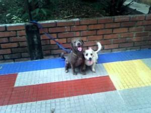 """""""Estas dos perritas tienen un año, ellas se quieren mucho y no se pueden separar, por lo tanto es mejor ubicarlas en la misma familia"""", dijo la Periodista del Barrio."""