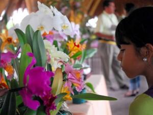Exposicion De Las Mejores Especies De Orquideas