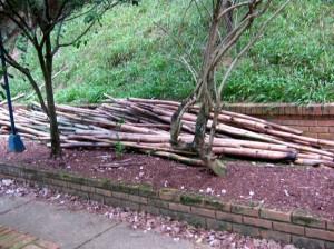 Con preocupación debo denunciar el lamentable estado en el que se encuentra el parque de Leones.