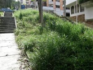 Es impresionante ver la espesa vegetación que cubre toda la calle 48 peatonal.