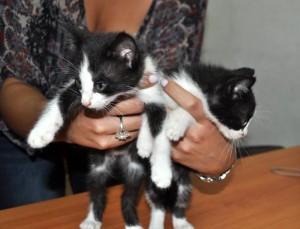 Estos gaticos buscan un hogar que los adopte.