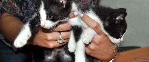 Mascotas que buscan su hogar