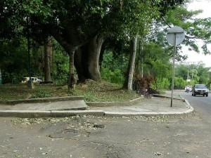 El crecimiento de la raíz afecta el  pavimento en la calle 55 con carrera 36.