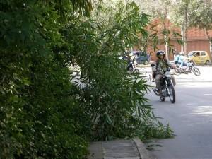 Aunque ya no existe en el sitio, esta rama permane-ció varios días obstaculizando el paso de los peatones en el andén del parque La Flora.