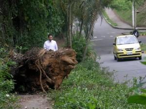 Estos troncos fueron talados hace casi un mes y no han sido levantados.