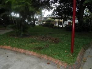 Restos de rama en el prado del parque.