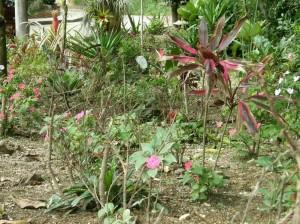Las flores y plantas hacen parte del parque que hasta hace dos meses era un basurero.