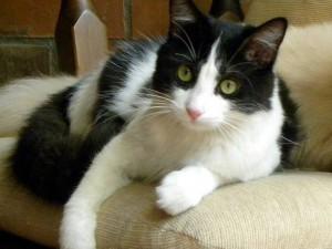 Esta es Flora, la gata perdida en San Pío.