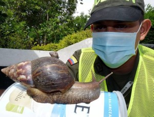 Tenga en cuenta que no todas las especies de caracoles son peligrosas.