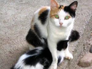 Diferentes tipos de gatos podrán ser adoptados en esta jornada.