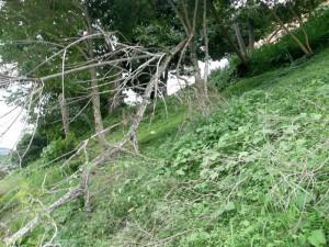 Este es el árbol que esperan sea recogido muy pronto.