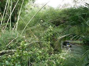 Según una carta a los residentes del sector, a los árboles nunca se les había hecho mantenimiento.