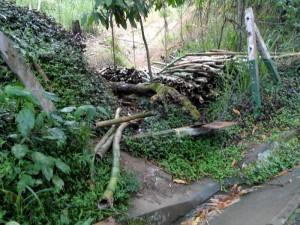 Estos bambúes a un lado de la vía parecen no tener dueño.