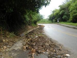 Piden que recojan unos bambúes que quedaron a un costado de la vía.