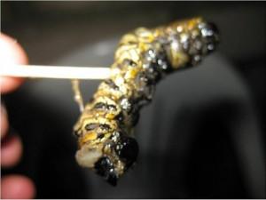 También había gusanos de los gordos de imbondeiro, no los probé, me hice el pingo porque estaban vivos.