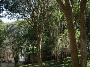 El parque luce verde y limpio.