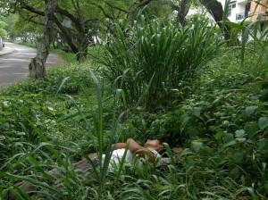 Hasta los indigentes encuentran un espacio para descansar en esta maleza espesa.
