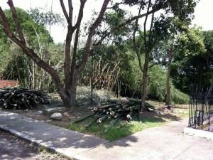Este bosque mantenía un ambiente fresco, natural y hermoso en este barrio. (Andrés Guzmán).