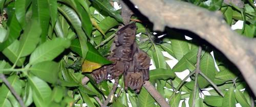 ¿Por qué temerles a los murciélagos?