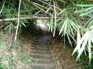 El paso de peatones es casi imposible debido a la maleza que rodea las escaleras.