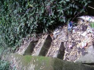 El piso de las escaleras es invadido por el pasto.