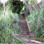 A lado y lado las escaleras estaban ANTES inundadas de maleza
