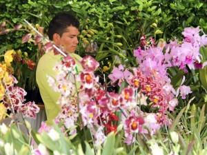 Exhibición de Orquídeas.