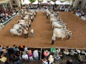 La Feria Ganadera estará en Cenfer del 10 al 18 de septiembre.