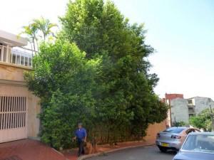En esta zona de frutales ocurrió el caso denunciado por un vecino del sector.