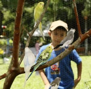 El Festival de Orquídeas y Pájaros Cantores en el parque Mejoras Públicas.