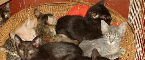 Adopte un perro o un gato