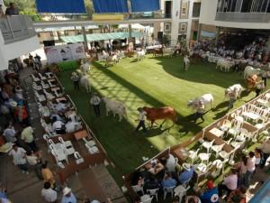 La Feria Nacional Cebú se realizará en Cenfer.