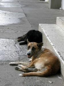 Los perros de Lebrija necesitan un albergue.