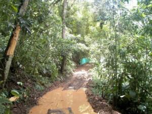 En la foto se observa el camino que abrieron en la zona verde aledaña a Altos del Jardín.