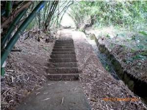Hace poco estas escaleras entre Pan de Azúcar y Terrazas fueron podadas. Los vecinos piden que se mantengan esas obras.